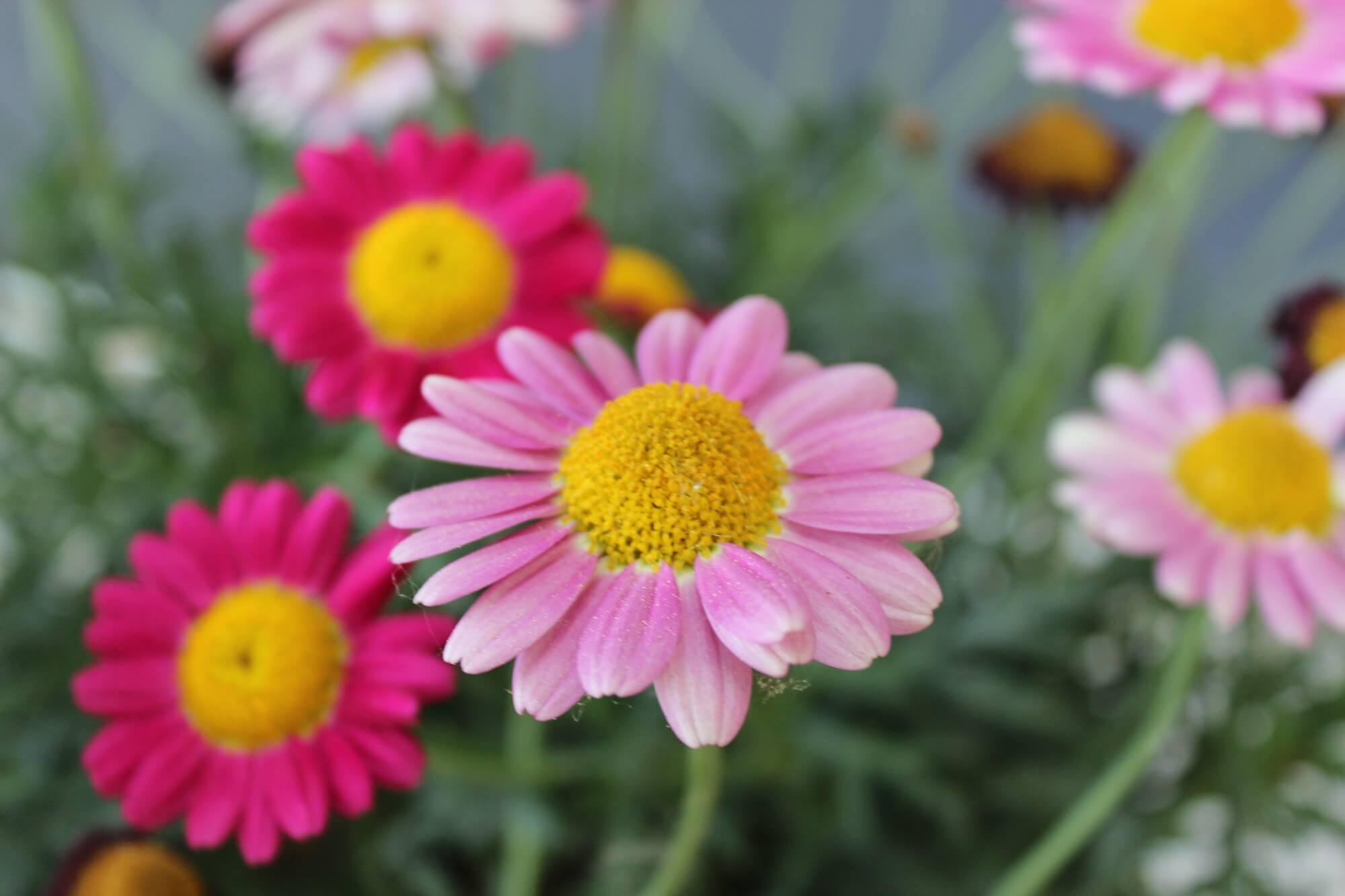 Blume 7