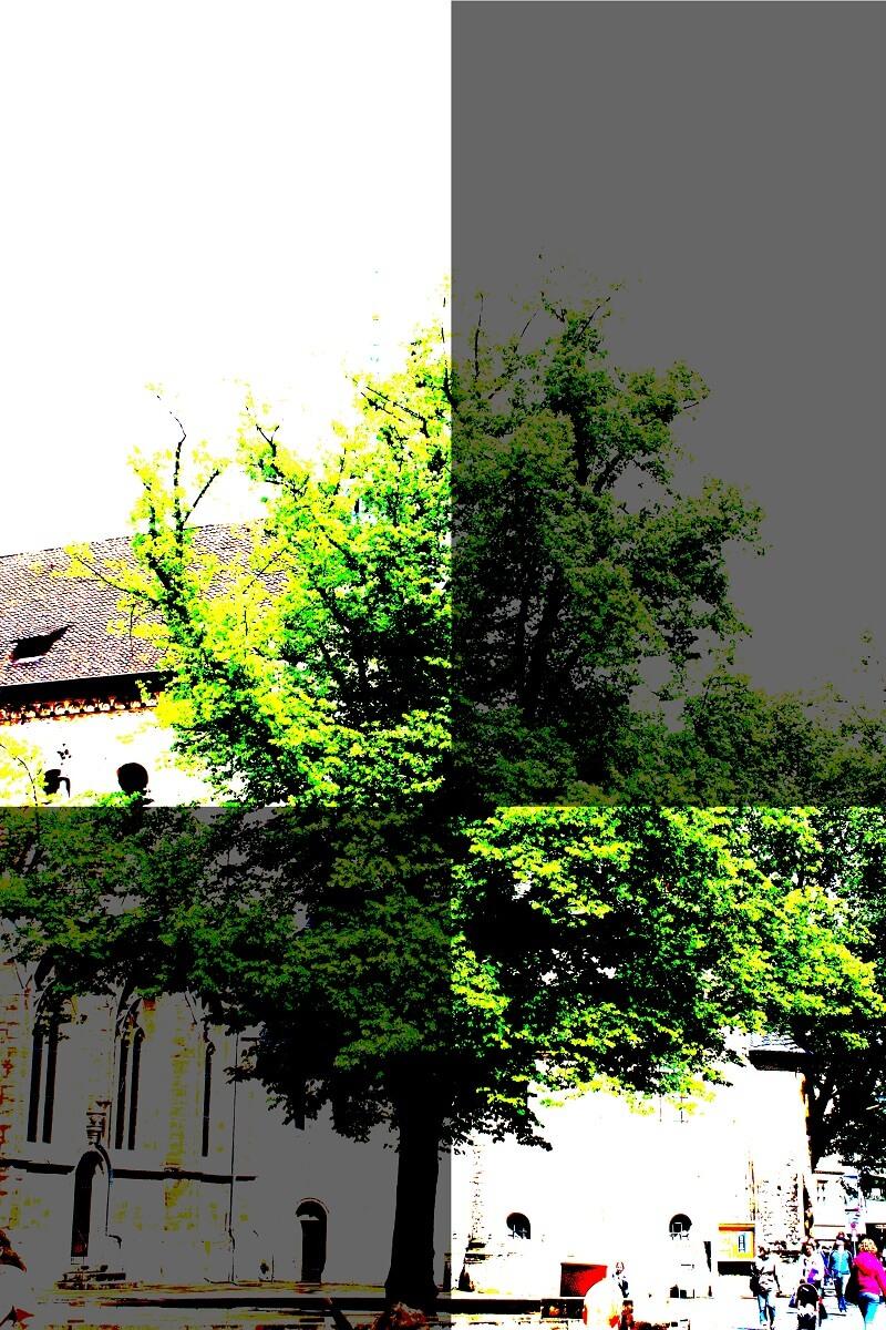Ein großer Baum auf dem Domplatz
