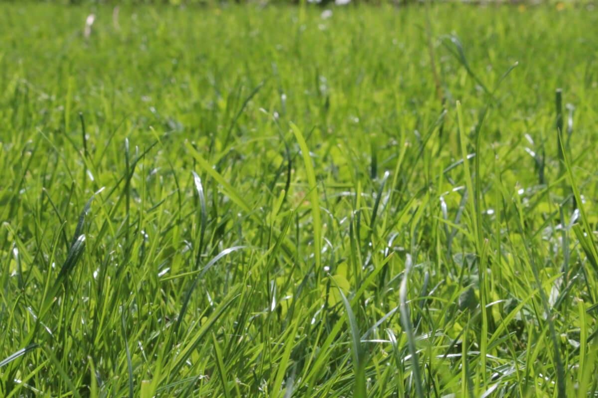 Rasen in unserem Garten