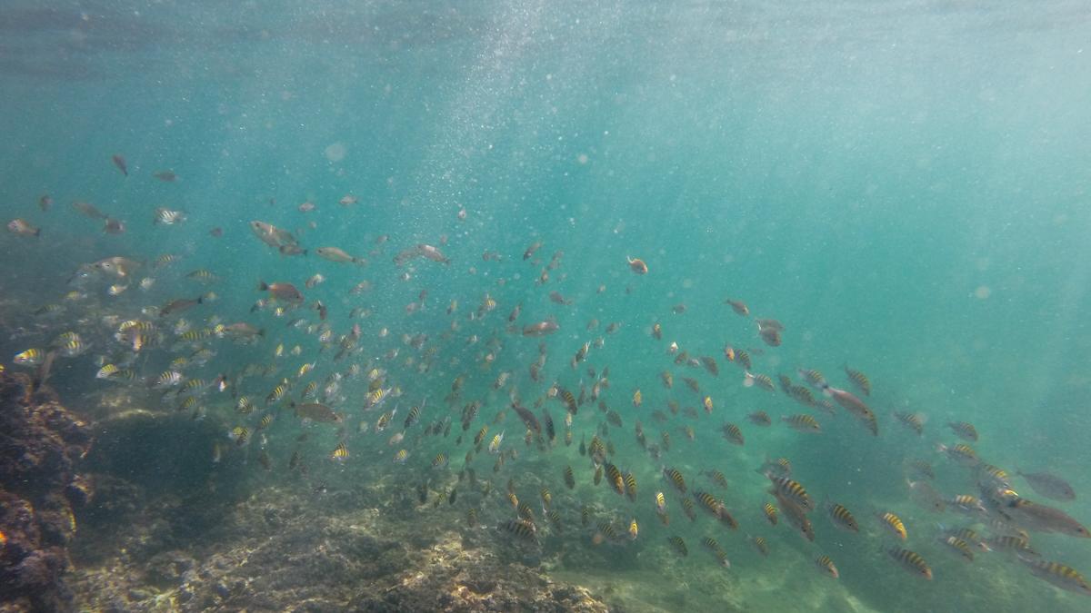Fischschwarm 1