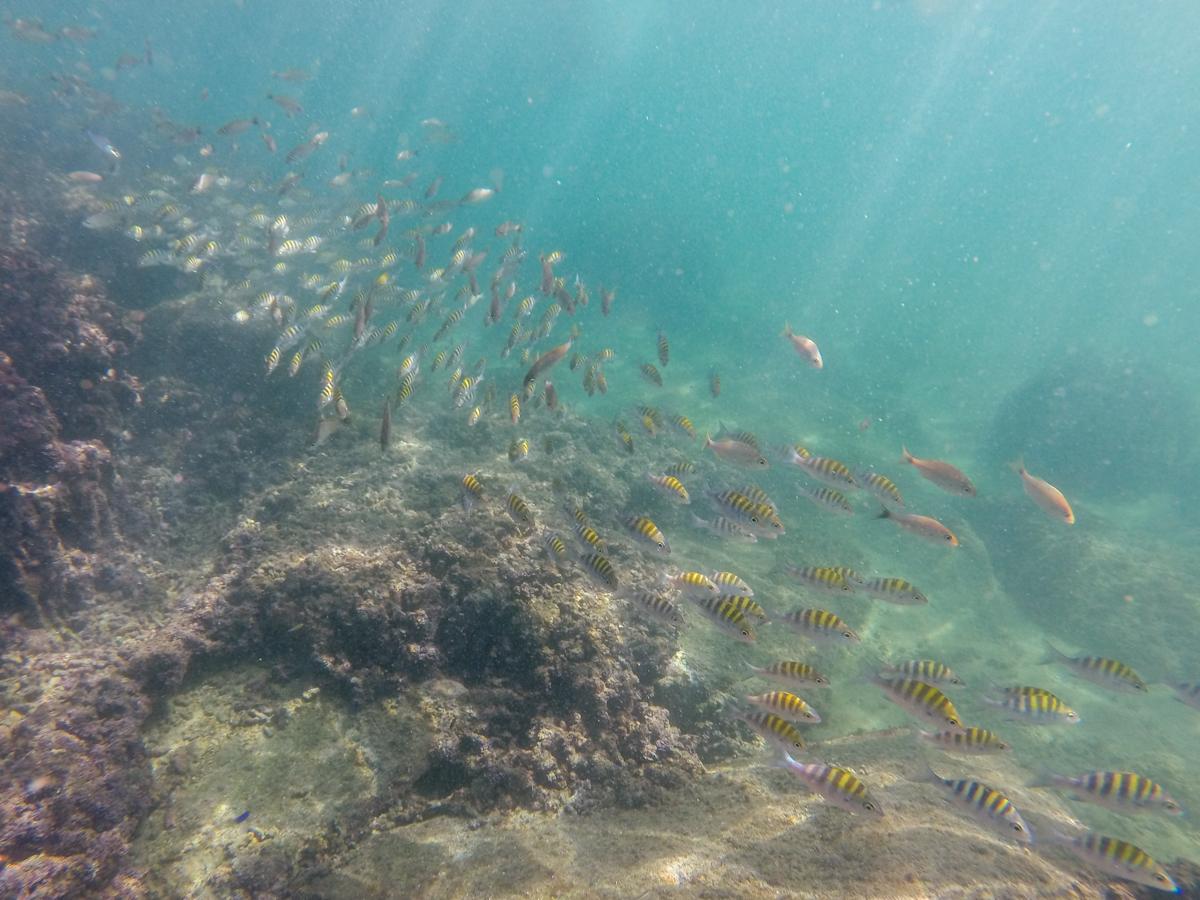 Fischschwarm 2